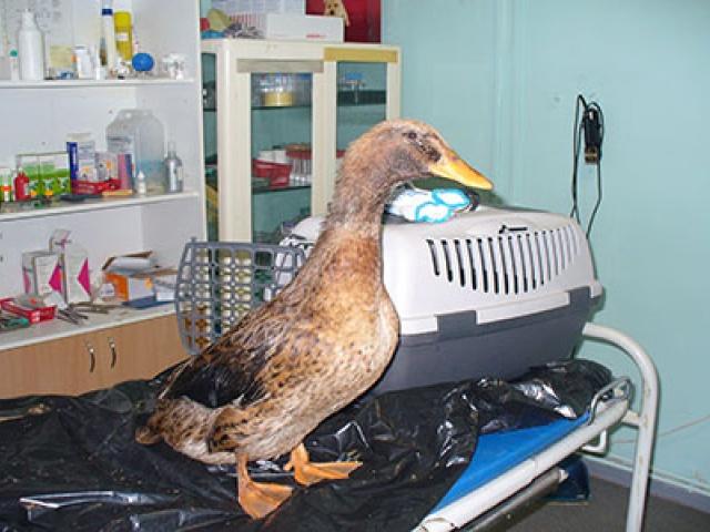 Lindude ja loomade puhastamine naftareostusest